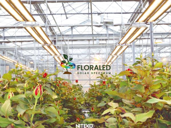 Scegliere la lampada ideale per la coltivazione: un aiuto dalle lampade LED.